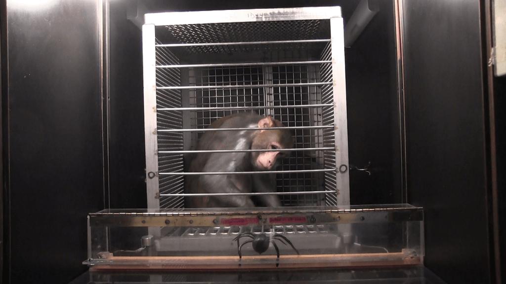 NIH monkey torture