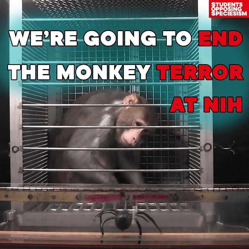 End NIH Monkey Terror