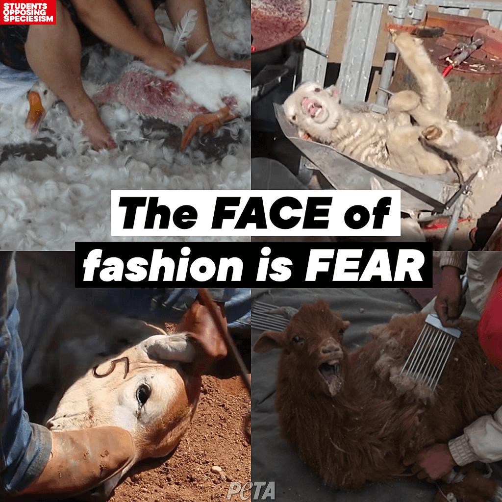 URBN Brands fashion fear