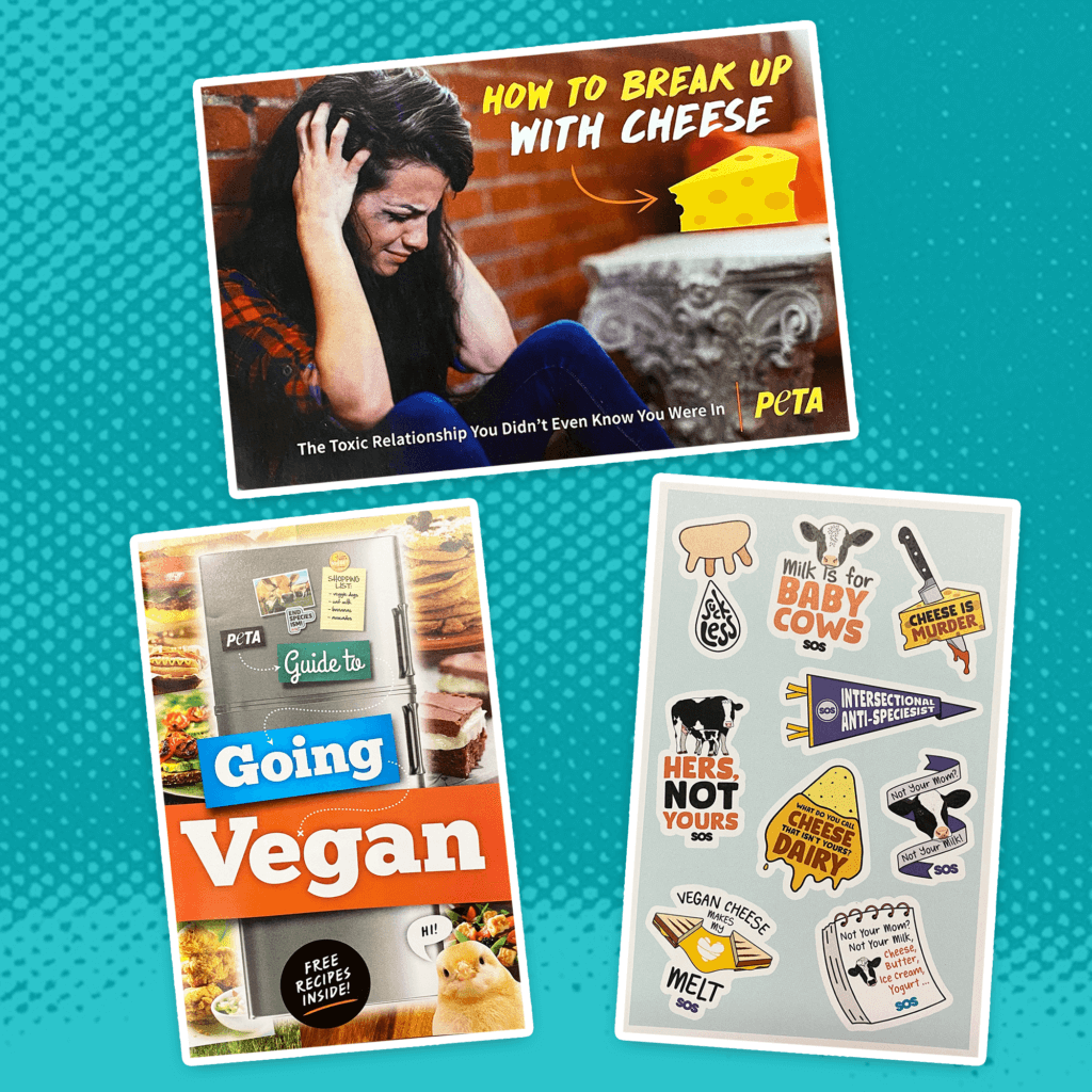 Order Our 'Breakup Box' to Move On From Dairy Today   SOS